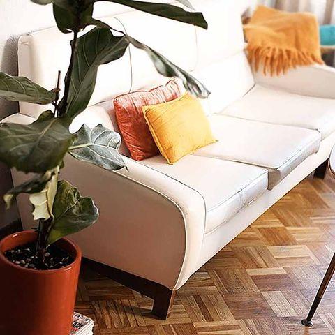 Flowerpot, Room, Interior design, Textile, Wall, Furniture, Floor, Flooring, Pillow, Cushion,