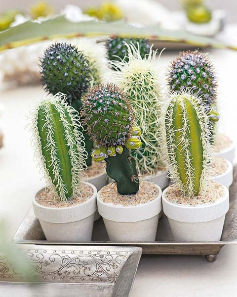 Vegetation, Green, Daytime, White, Flowerpot, Adaptation, Botany, Terrestrial plant, Garden, Flowering plant,