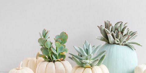 Flowerpot, Ceramic, Plant, Houseplant, Vase, Flower,