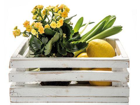 Flowerpot, Yellow, Flower, Plant, Houseplant, Cut flowers, Flowering plant, Herbaceous plant,