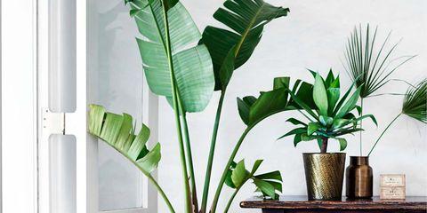 Flowerpot, Houseplant, Leaf, Green, Room, Plant, Furniture, Interior design, Living room, Tree,