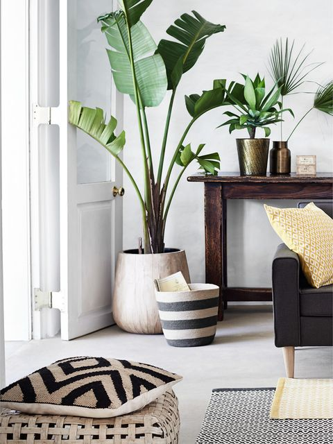Furniture, Interior design, Room, Living room, Green, Houseplant, Leaf, Table, Coffee table, Plant,