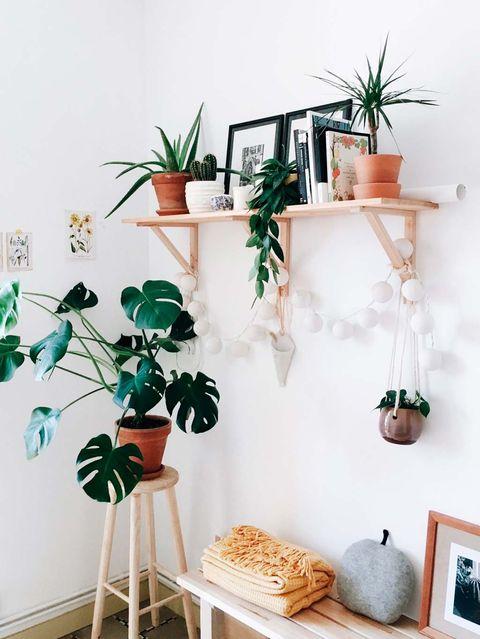 Shelf, Furniture, Green, Room, Wall, Houseplant, Shelving, Plant, Interior design, Leaf,