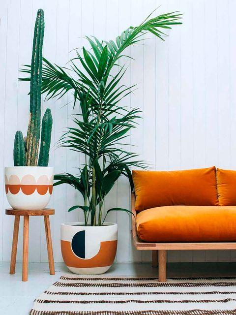 Houseplant, Orange, Flowerpot, Plant, Grass family, Room, Furniture, Botany, Tree, Living room,