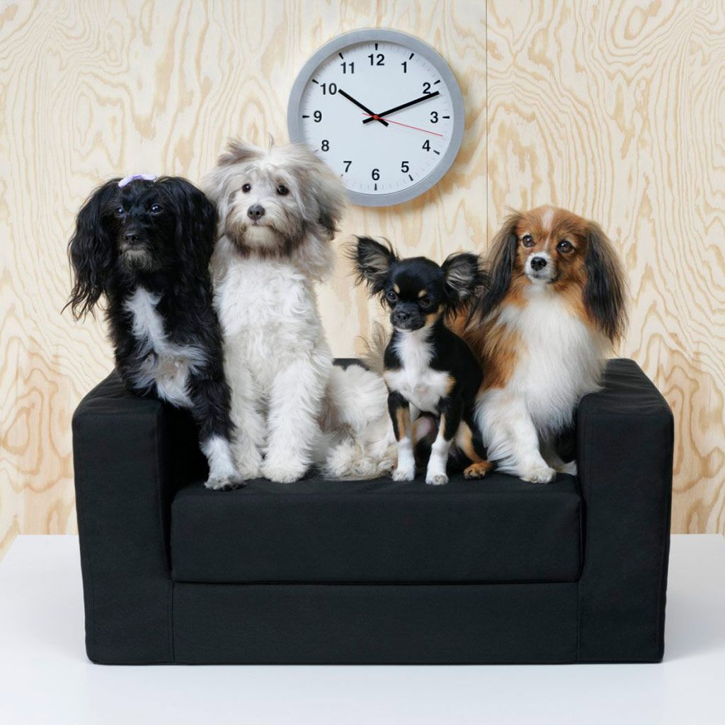 Ikea lanza una colección para mascotas