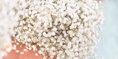 Petal, People in nature, Spring, Embellishment, Cut flowers, Blossom, Ceremony, Lace, Bridal accessory, Floral design,