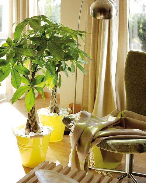 Ideas para decorar con plantas de interior for Fronda decoracion