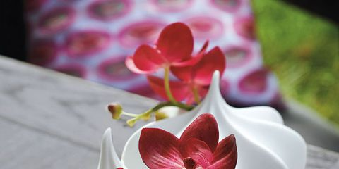 Petal, Flower, Red, Pink, Cut flowers, Blossom, Flowering plant, Carmine, Artificial flower, Spring,