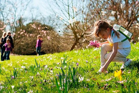 People in nature, Nature, Grass, Spring, Meadow, Natural landscape, Flower, Wildflower, Plant, Grassland,