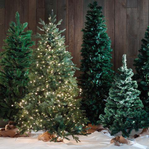Como Elegir El Arbol De Navidad - Arboles-de-naidad