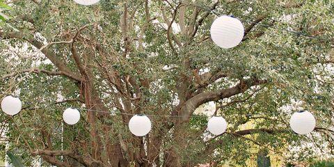 Decoration, Chiavari chair, Chair, Table, Ceremony, Backyard, Wedding reception, Tree, Branch, Event,