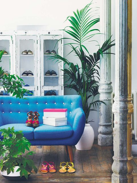Interior design, Wall, Flowerpot, Majorelle blue, Living room, Interior design, Turquoise, Aqua, Couch, Home,