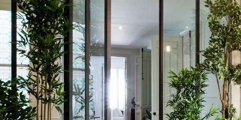 Plant, Glass, Flooring, Fixture, Door, Flowerpot, Houseplant, Home door, Tile, Daylighting,