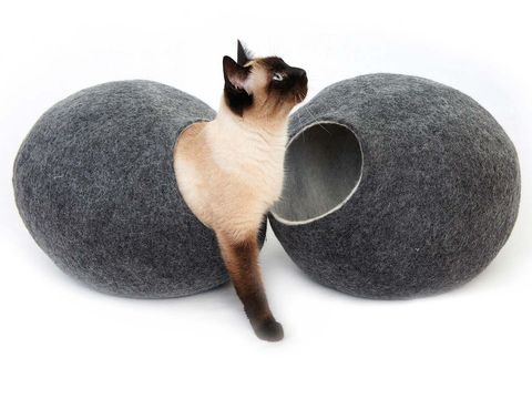 Cat, Siamese, Felidae, Small to medium-sized cats, Cat toy, Cat supply, Carnivore, Cat bed,