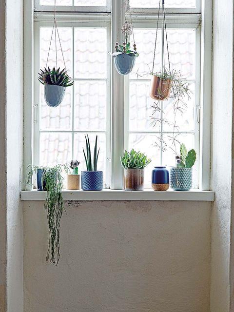 Flowerpot, Wall, Interior design, Interior design, Fixture, Houseplant, Vase, Window treatment, Daylighting, Pottery,