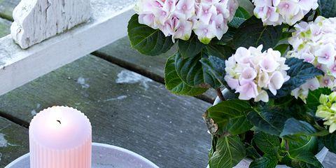 Petal, Purple, Flower, Pink, Serveware, Lavender, Peach, Flowering plant, Dishware, Vase,