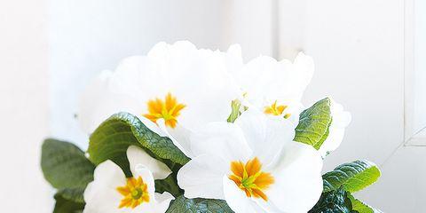Petal, Flowerpot, Flower, Flowering plant, Interior design, Still life photography, Vase, Serveware, Houseplant, Pottery,
