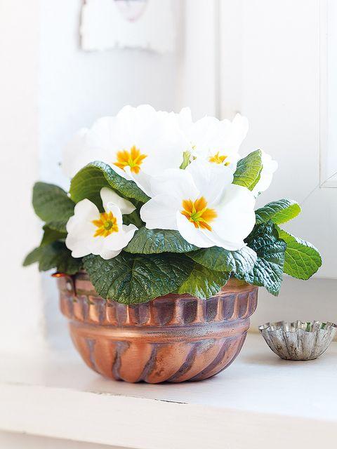 Petal, Flower, Flowerpot, Flowering plant, Interior design, Paint, Vase, Still life photography, Houseplant, Floral design,
