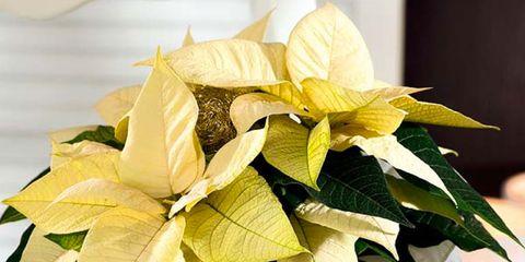 Petal, Flower, Leaf, Cut flowers, Artifact, Flower Arranging, Flowering plant, Floral design, Beige, Interior design,