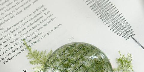 Leaf, Botany, Publication, Paper, Paper product, Book, Herb,