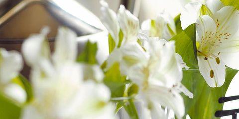 Petal, Flower, Glass, White, Drinkware, Bouquet, Cut flowers, Flowering plant, Artifact, Floristry,