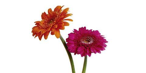 Petal, Flower, Orange, Amber, Flowering plant, Botany, Cut flowers, Artificial flower, Flower Arranging, Still life photography,