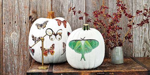 Pumpkin, Leaf, Still life, Wood, Tree, Plant, Room, Table, Branch, Furniture,