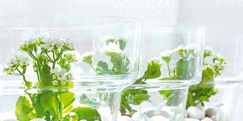 Food, Plant, Flower, Cuisine, Produce, Dish, Ingredient,