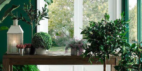 Houseplant, Flowerpot, Room, Floor, Furniture, Interior design, Plant, Home, Tile, Table,