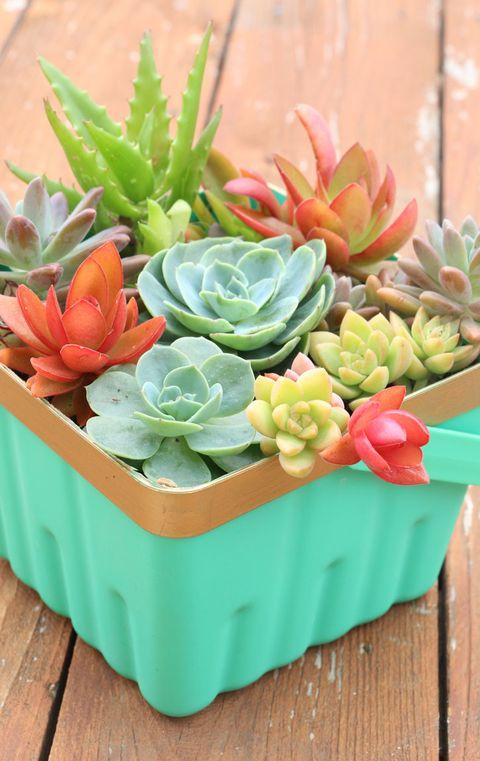 Flowerpot, Echeveria, Flower, Plant, white mexican rose, Succulent plant, Stonecrop family, Houseplant, Artificial flower, Floral design,