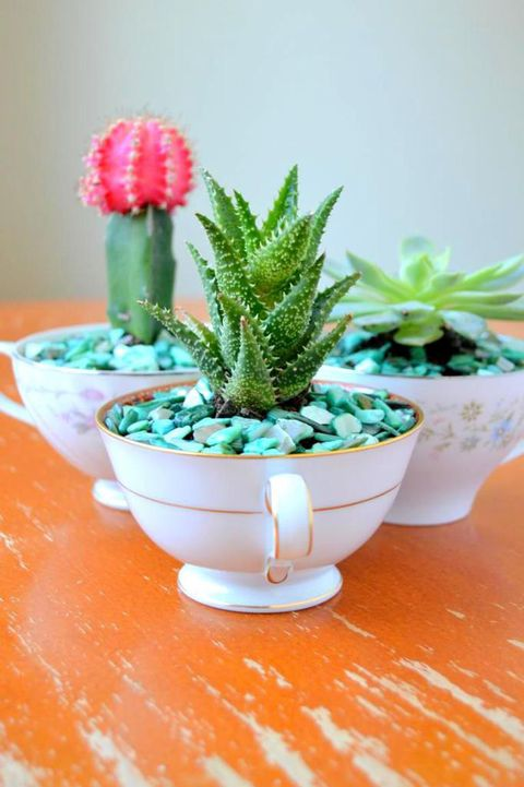 Flowerpot, Plant, Interior design, Terrestrial plant, Botany, Houseplant, Annual plant, Pottery, Thorns, spines, and prickles, Succulent plant,