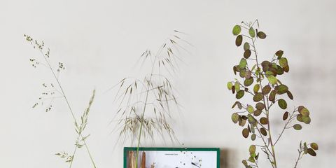 Room, Furniture, Shelf, Branch, Table, Twig, Wall, Still life photography, Interior design, Plant,