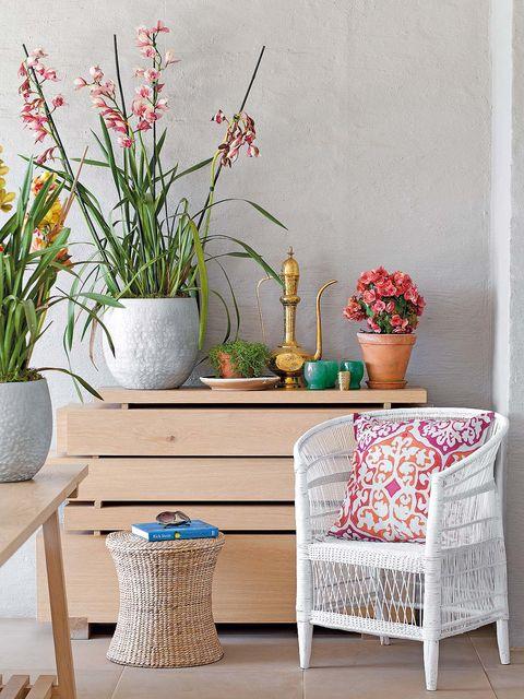 Flowerpot, Plant, Flower, Interior design, Vase, Houseplant, Artifact, Wicker, Flowering plant, Plant stem,