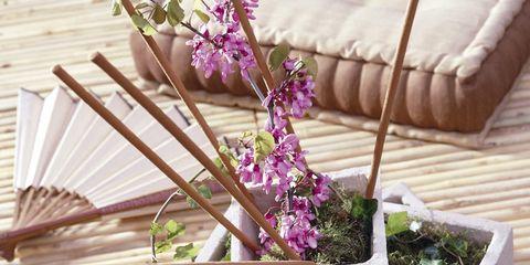 Wood, Flower, Purple, Lavender, Petal, Hardwood, Violet, Flowerpot, Herb, Couch,