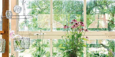 Plant, Flowerpot, Houseplant, Herb,
