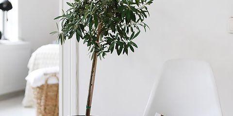 Flowerpot, Interior design, Houseplant, Still life photography, Design, Lamp, Cylinder, Household supply, Vase, Home accessories,