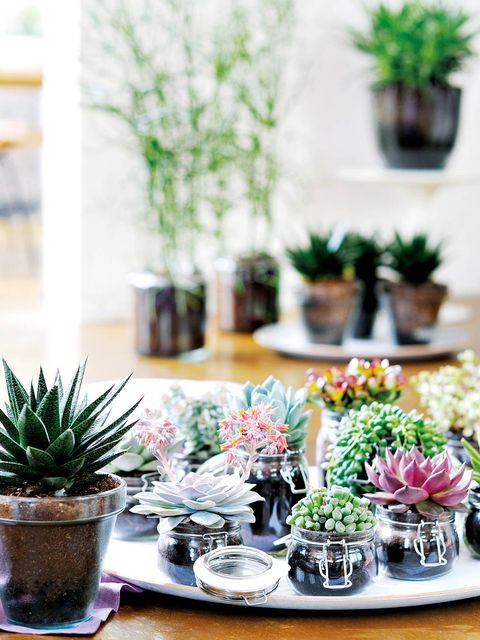 Flowerpot, Houseplant, Green, Flower, Plant, Room, Cactus, Table, Succulent plant, Interior design,