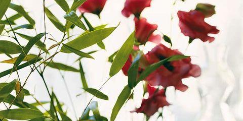 Petal, Glass, Flower, Liquid, Drinkware, Fluid, Cut flowers, Flowering plant, Carmine, Artifact,
