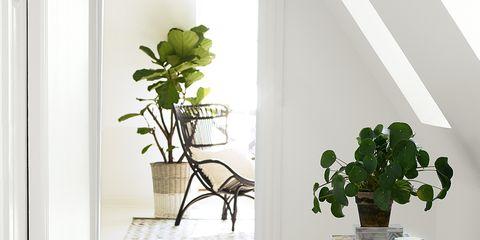 Plant, Wood, Leaf, Flowerpot, Fixture, Houseplant, Interior design, Plant stem, Annual plant,