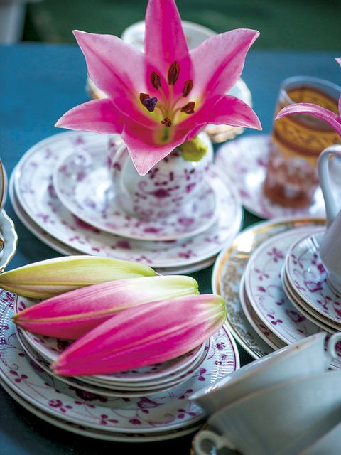 Pink, Teacup, Petal, Cup, Flower, Tableware, Plant, Coffee cup, Drinkware, Cup,