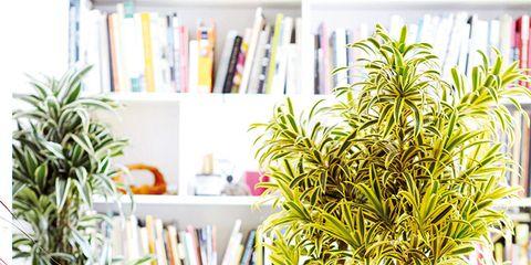 Flowerpot, Room, Interior design, Interior design, Shelf, Shelving, Teal, Houseplant, Bookcase, Vase,
