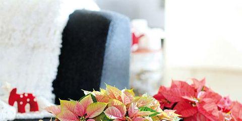 Petal, Flower, Serveware, Flowerpot, Red, Centrepiece, Interior design, Flowering plant, Artifact, Carmine,