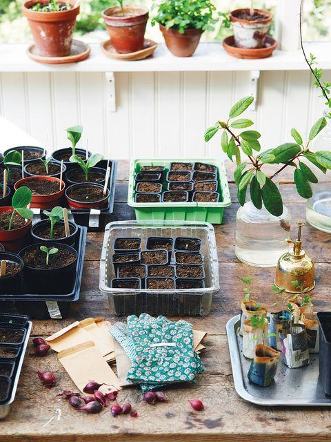 Houseplant, Herb, Food, Plant, Brunch, Superfood, Dish,