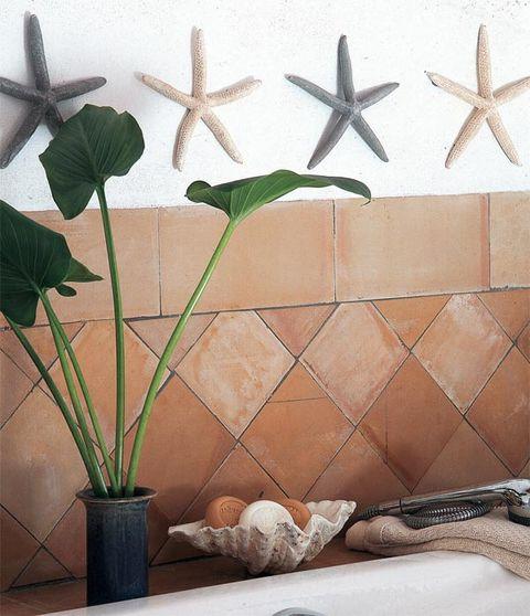 Organism, Leaf, Line, Botany, Invertebrate, Starfish, Beige, Echinoderm, Flowering plant, Marine invertebrates,