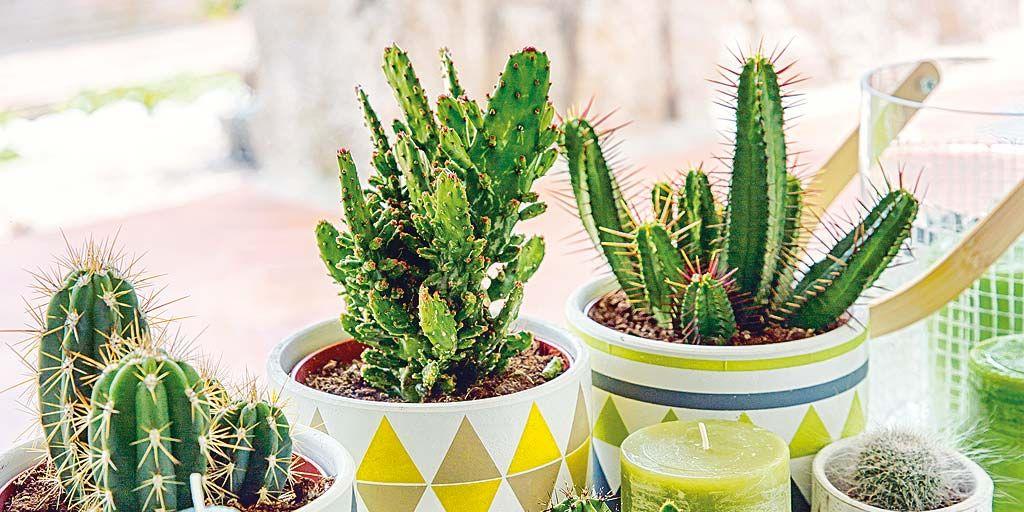 8 preciosas ideas para decorar la casa con cactus for Ideas para decorar la casa de la novia