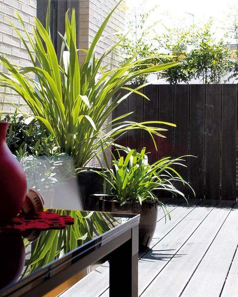 plantas en el porche