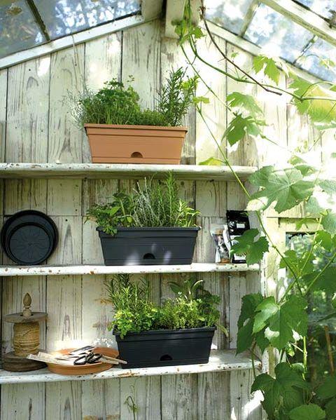 invernadero en el jardín
