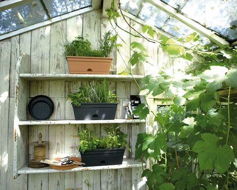 House, Botany, Houseplant, Tree, Plant, Room, Building, Window, Architecture, Garden,