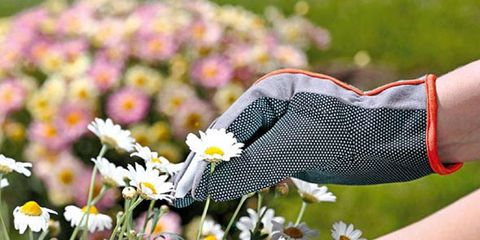 Grass, Human leg, Flower, Petal, Chamaemelum nobile, Groundcover, camomile, Calf, Sock, chamomile,