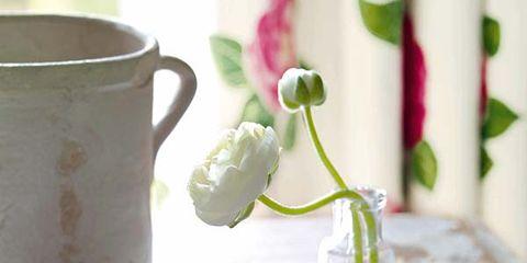 Serveware, Dishware, Porcelain, Petal, Ceramic, Cup, Teacup, Drinkware, Tablecloth, Pottery,